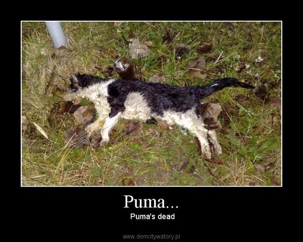 Puma... –  Puma's dead
