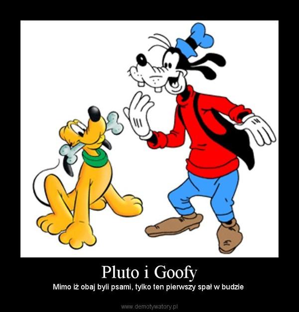 Pluto i Goofy – Mimo iż obaj byli psami, tylko ten pierwszy spał w budzie