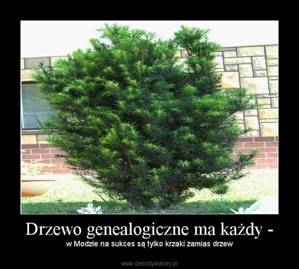 Drzewo genealogiczne ma każdy - – w Modzie na sukces są tylko krzaki zamias drzew