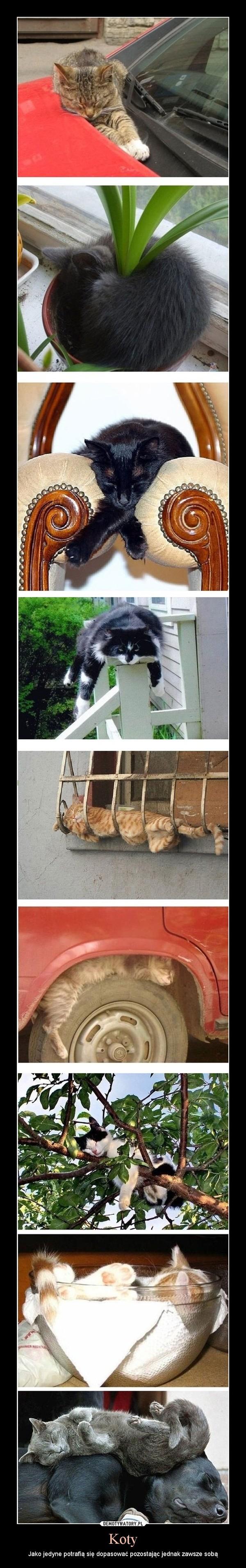 Koty – Jako jedyne potrafią się dopasować pozostając jednak zawsze sobą