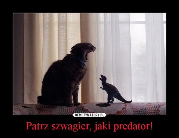 Patrz szwagier, jaki predator! –