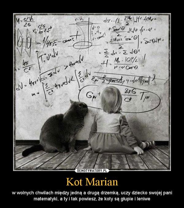 Kot Marian – w wolnych chwilach między jedną a drugą drzemką, uczy dziecko swojej pani matematyki, a ty i tak powiesz, że koty są głupie i leniwe
