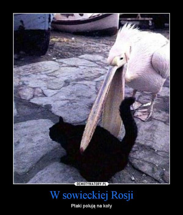 W sowieckiej Rosji – Ptaki polują na koty