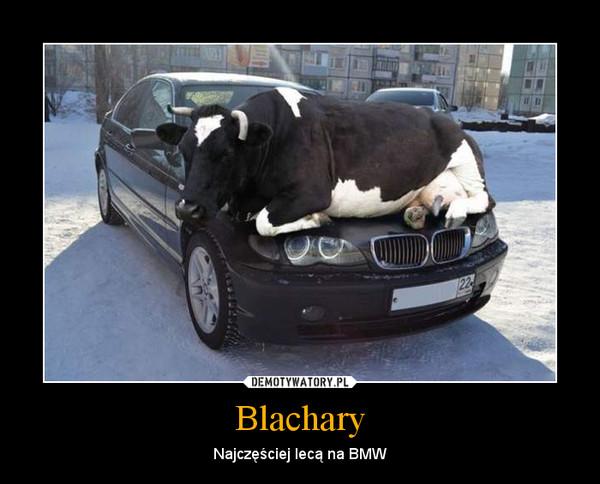 Blachary – Najczęściej lecą na BMW