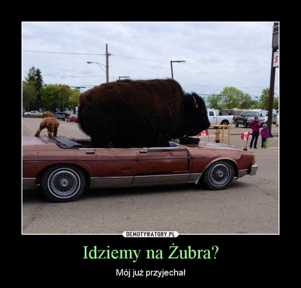 Idziemy na Żubra? – Mój już przyjechał