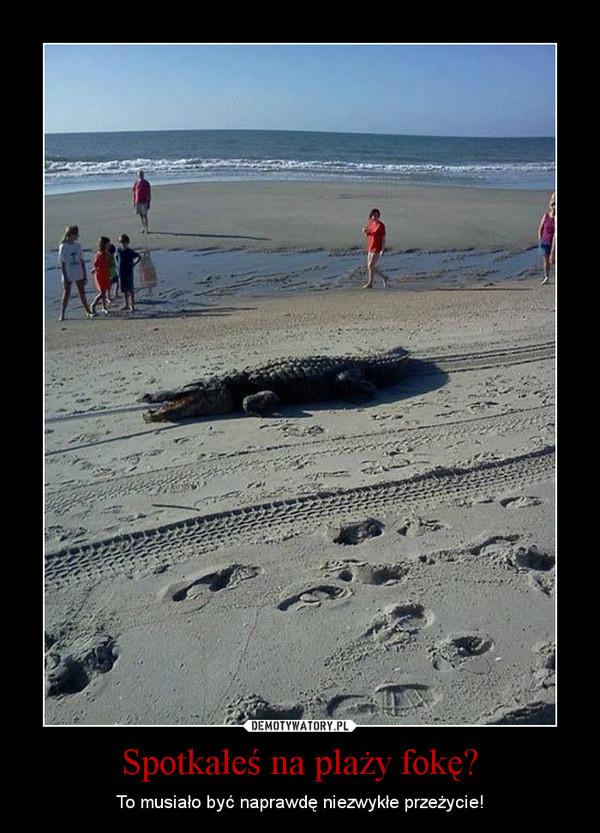 Spotkałeś na plaży fokę? – To musiało być naprawdę niezwykłe przeżycie!