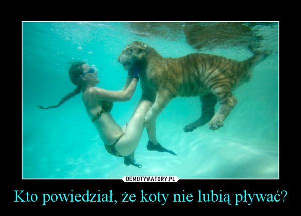 Kto powiedział, że koty nie lubią pływać? –