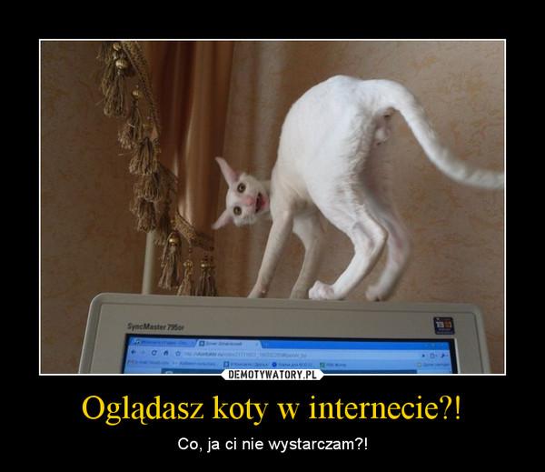 Oglądasz koty w internecie?! – Co, ja ci nie wystarczam?!