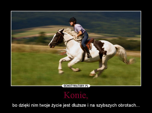 1372255825_vuvbui_600.jpg