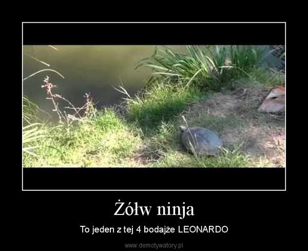Żółw ninja – To jeden z tej 4 bodajże LEONARDO