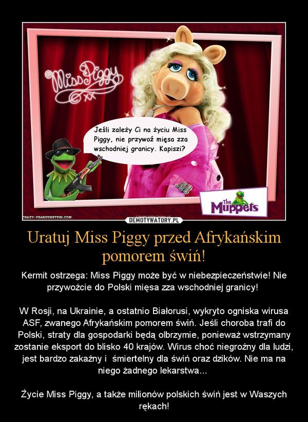 Uratuj Miss Piggy przed Afrykańskim pomorem świń! – Kermit ostrzega: Miss Piggy może być w niebezpieczeństwie! Nie przywoźcie do Polski mięsa zza wschodniej granicy! W Rosji, na Ukrainie, a ostatnio Białorusi, wykryto ogniska wirusa ASF, zwanego Afrykańskim pomorem świń. Jeśli choroba trafi do Polski, straty dla gospodarki będą olbrzymie, ponieważ wstrzymany zostanie eksport do blisko 40 krajów. Wirus choć niegroźny dla ludzi, jest bardzo zakaźny i  śmiertelny dla świń oraz dzików. Nie ma na niego żadnego lekarstwa... Życie Miss Piggy, a także milionów polskich świń jest w Waszych rękach!
