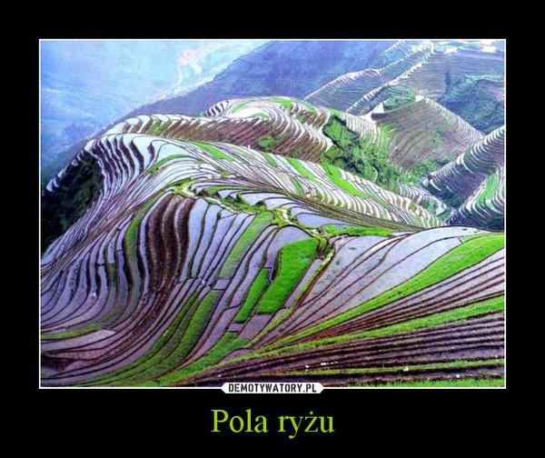 Pola ryżu –