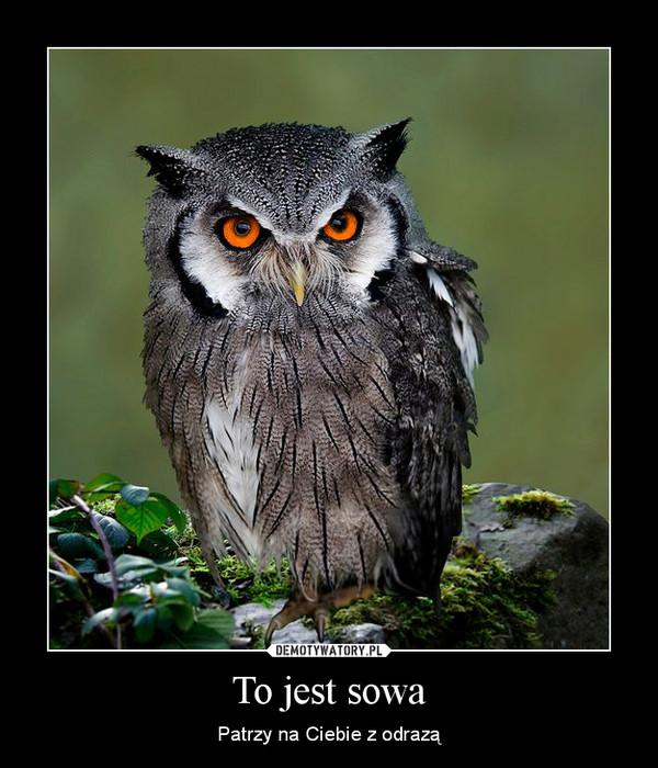 To jest sowa – Patrzy na Ciebie z odrazą