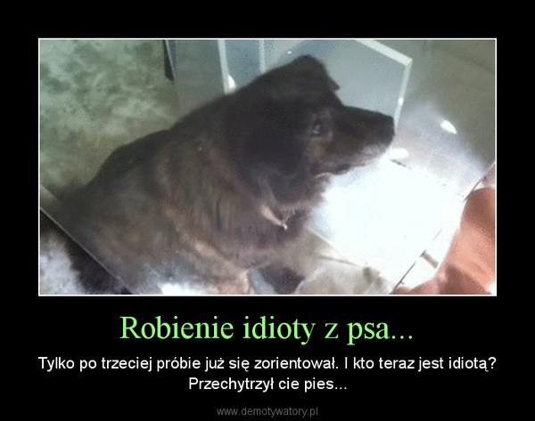 Robienie idioty z psa... – Tylko po trzeciej próbie już się zorientował. I kto teraz jest idiotą? Przechytrzył cie pies...