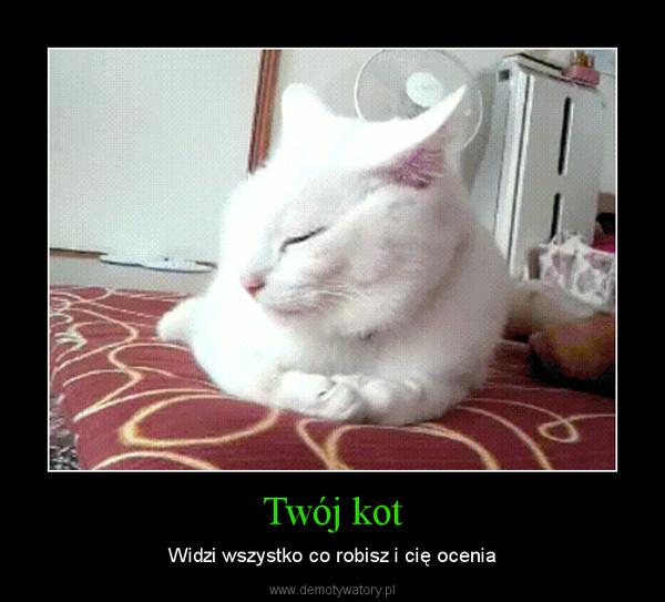 Twój kot – Widzi wszystko co robisz i cię ocenia