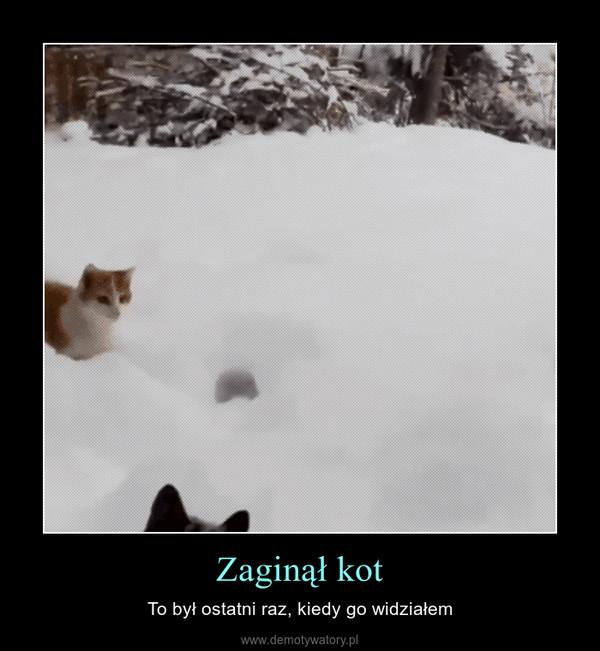 Zaginął kot – To był ostatni raz, kiedy go widziałem