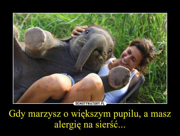 Gdy marzysz o większym pupilu, a masz alergię na sierść... –