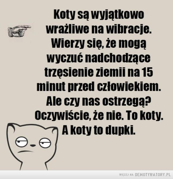 Prawda o kotach –
