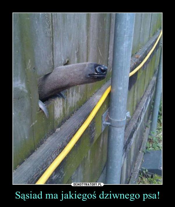 Sąsiad ma jakiegoś dziwnego psa! –