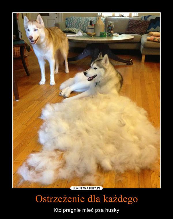 Ostrzeżenie dla każdego – Kto pragnie mieć psa husky