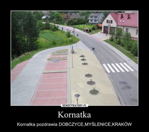 Kornatka