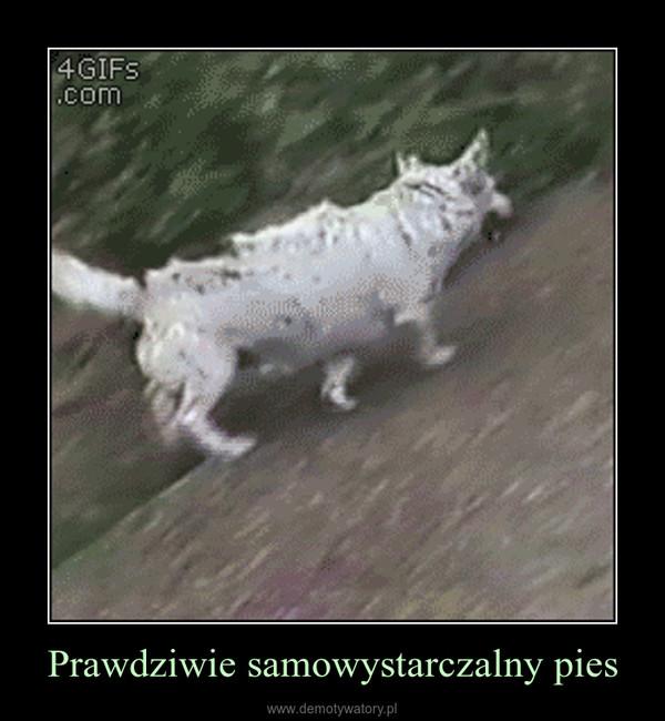 Prawdziwie samowystarczalny pies –