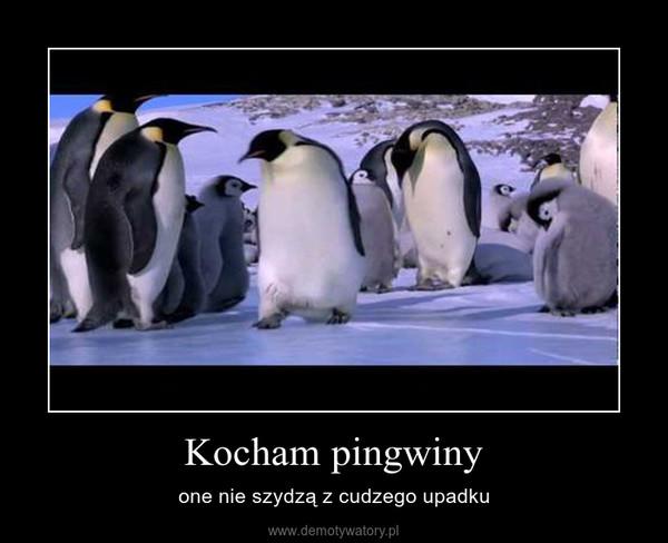 Kocham pingwiny – one nie szydzą z cudzego upadku