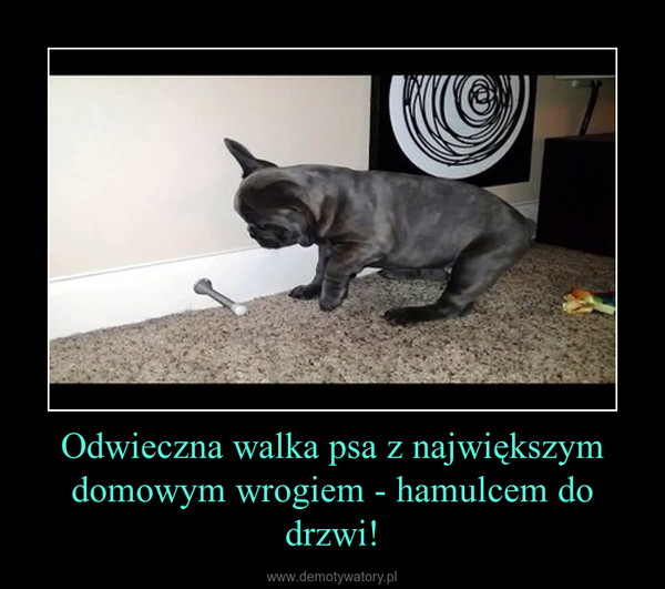 Odwieczna walka psa z największym domowym wrogiem - hamulcem do drzwi! –