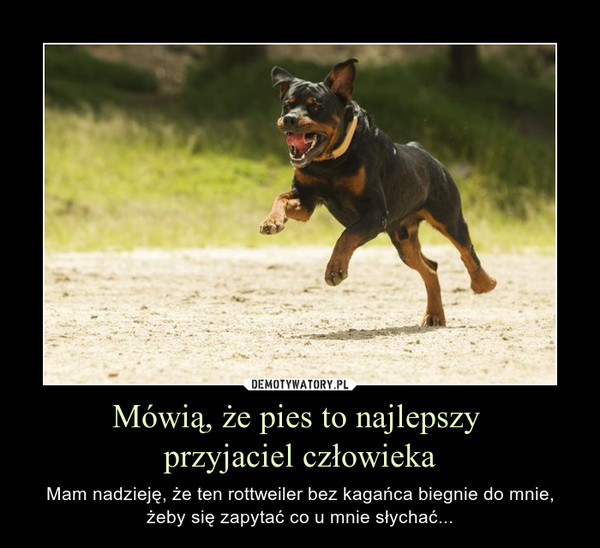Mówią, że pies to najlepszy przyjaciel człowieka – Mam nadzieję, że ten rottweiler bez kagańca biegnie do mnie, żeby się zapytać co u mnie słychać...