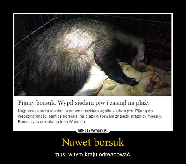 Nawet borsuk – musi w tym kraju odreagować.