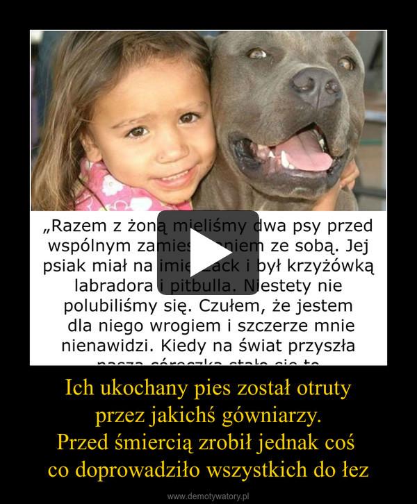Ich ukochany pies został otruty przez jakichś gówniarzy. Przed śmiercią zrobił jednak coś  co doprowadziło wszystkich do łez –