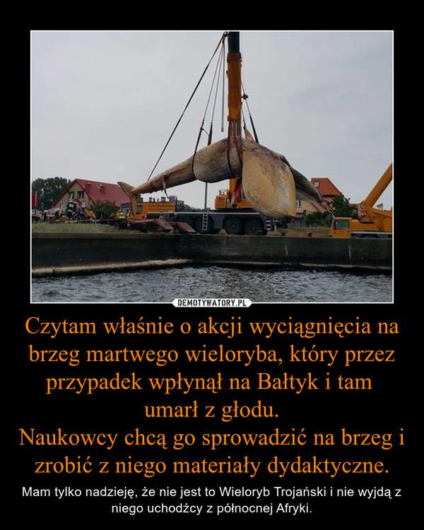 Czytam właśnie o akcji wyciągnięcia na brzeg martwego wieloryba, który przez przypadek wpłynął na Bałtyk i tam umarł z głodu.Naukowcy chcą go sprowadzić na brzeg i zrobić z niego materiały dydaktyczne. – Mam tylko nadzieję, że nie jest to Wieloryb Trojański i nie wyjdą z niego uchodźcy z północnej Afryki.