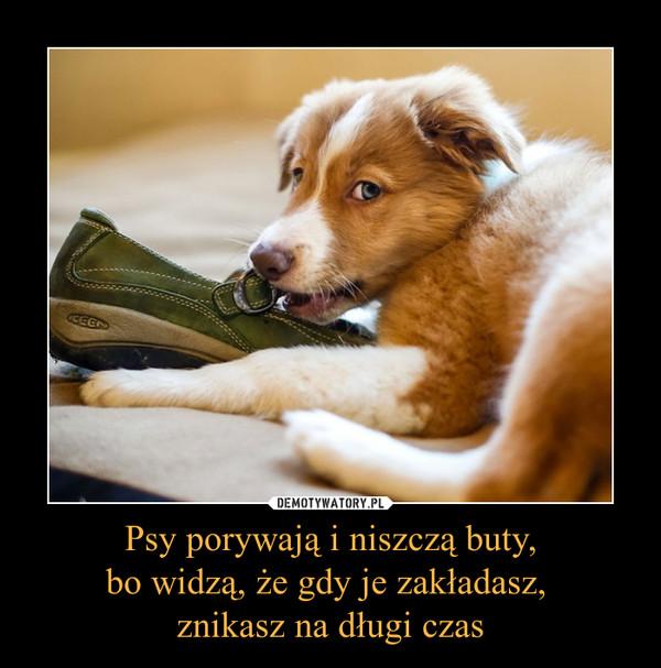 Psy porywają i niszczą buty,bo widzą, że gdy je zakładasz, znikasz na długi czas –