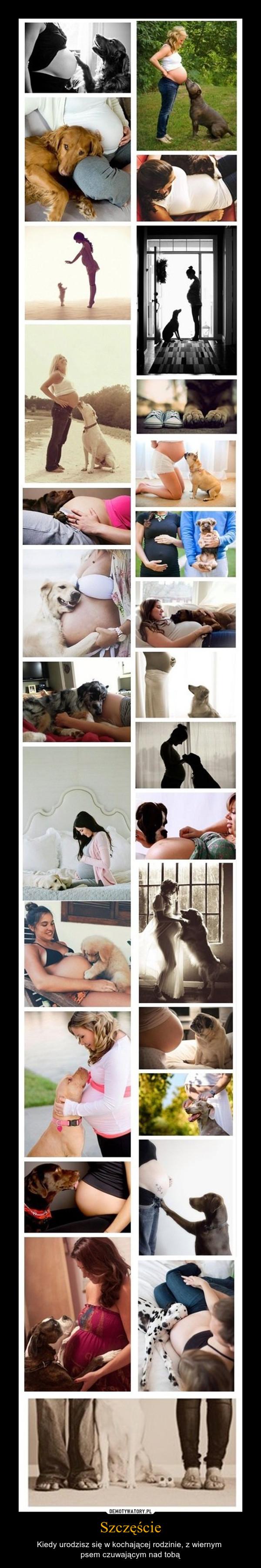 Szczęście – Kiedy urodzisz się w kochającej rodzinie, z wiernym psem czuwającym nad tobą