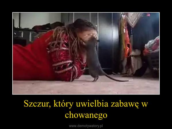 Szczur, który uwielbia zabawę w chowanego –