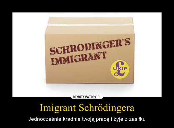 Imigrant Schrödingera – Jednocześnie kradnie twoją pracę i żyje z zasiłku
