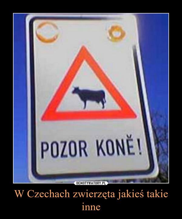 W Czechach zwierzęta jakieś takie inne –
