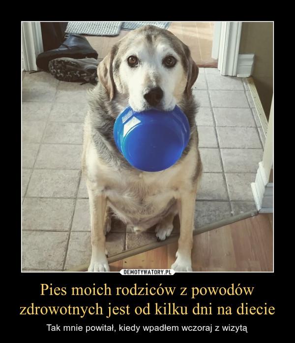 Pies moich rodziców z powodów zdrowotnych jest od kilku dni na diecie – Tak mnie powitał, kiedy wpadłem wczoraj z wizytą
