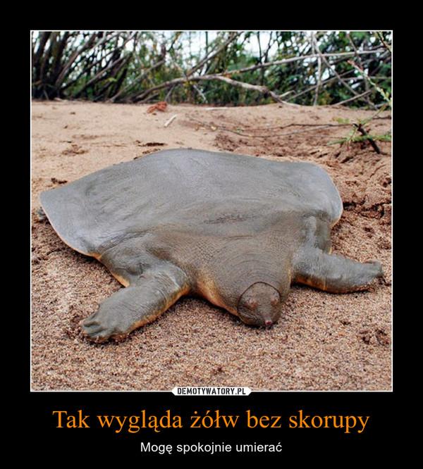 Tak wygląda żółw bez skorupy – Mogę spokojnie umierać