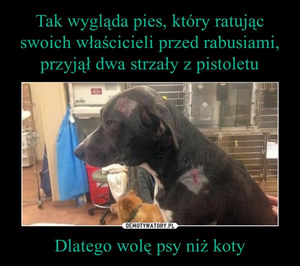 Dlatego wolę psy niż koty –