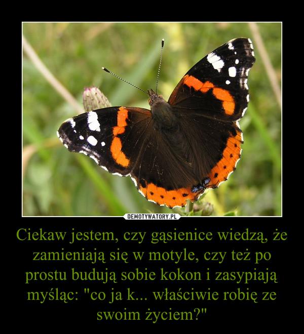 """Ciekaw jestem, czy gąsienice wiedzą, że zamieniają się w motyle, czy też po prostu budują sobie kokon i zasypiają myśląc: """"co ja k... właściwie robię ze swoim życiem?"""" –"""