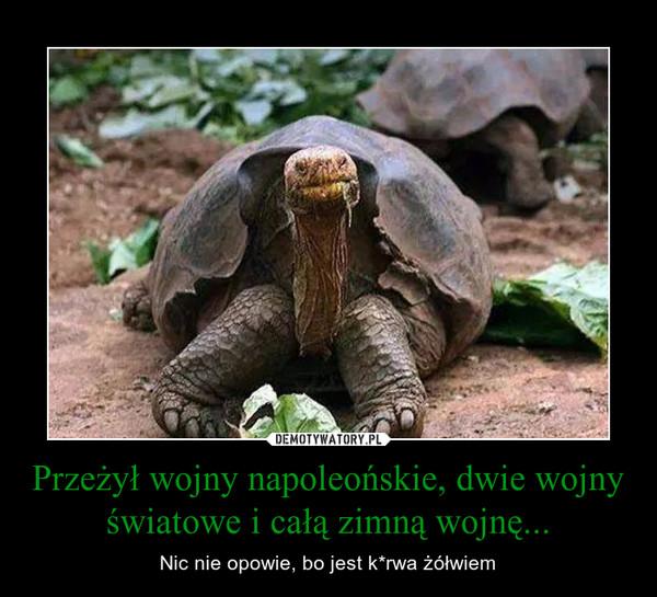 Przeżył wojny napoleońskie, dwie wojny światowe i całą zimną wojnę... – Nic nie opowie, bo jest k*rwa żółwiem