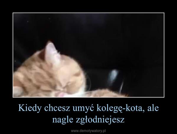 Kiedy chcesz umyć kolegę-kota, ale nagle zgłodniejesz –