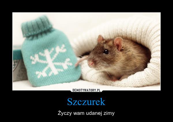 Szczurek – Życzy wam udanej zimy