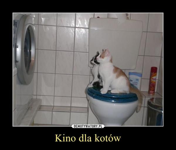 Kino dla kotów –