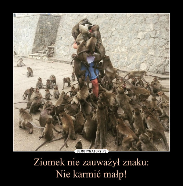 Ziomek nie zauważył znaku:Nie karmić małp! –