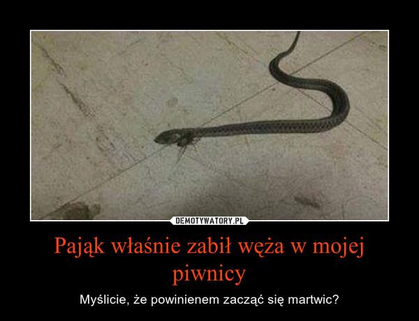 Pająk właśnie zabił węża w mojej piwnicy – Myślicie, że powinienem zacząć się martwic?