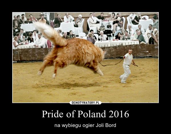 Pride of Poland 2016 – na wybiegu ogier Joli Bord
