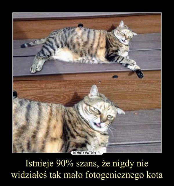 Istnieje 90% szans, że nigdy nie widziałeś tak mało fotogenicznego kota –