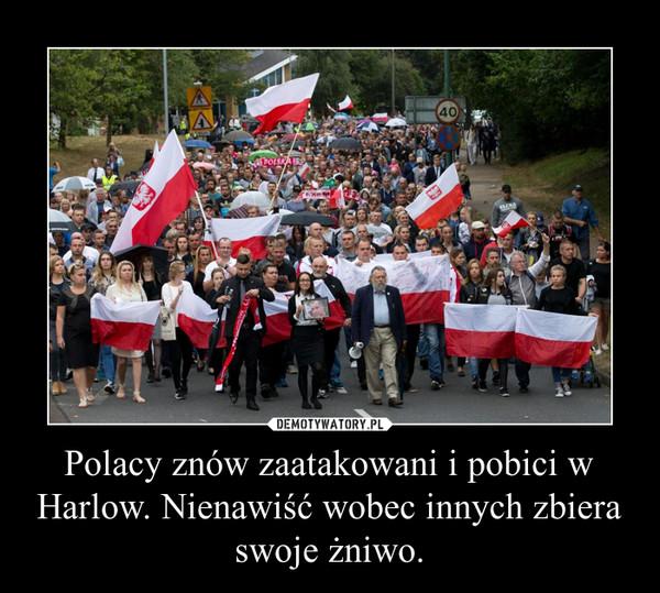 Polacy znów zaatakowani i pobici w Harlow. Nienawiść wobec innych zbiera swoje żniwo. –